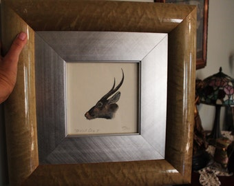 Beautiful Limited Edition Numbered Etching Horned Ones, Vintage Framed Antelope Print