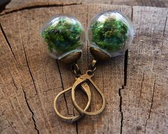 Real moss earrings, nature earrings, moss glass globe dangle earrings, terrarium earrings, eco friendly jewelry, real plant earrings