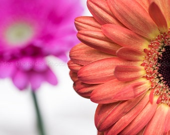Orange and pink Gerber daisy, photography fine art, floral home decor, nature wall art, spring photography, nature, flower, wall hanging
