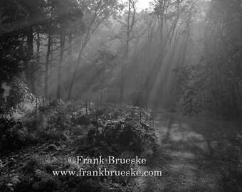 Misty Morning in The Garden, Trees, Morning Trees, Foggy Trees, Foggy morning, Black and White, Fine Art, Free Shipping,  Frank Brueske