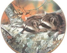 Vintage Collectible Raccoon Plate, 1989 Fascination By Carl Brenders