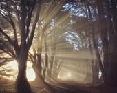 Tree photography - nature wall decor. landscape fine art print. dreamy nature photography. tree photography. sunrays. tree art.