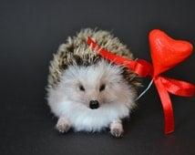 Baby Hedgehog N16, Animal sculpture OOAK