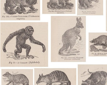 4 Printable PDF Victorian Animal Collage Sheets for Crafting - from Elephants to Gibbons - Vintage Decoupage Paper, Collage, Scrapbooking