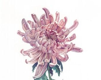 Chrysanthemum - Print