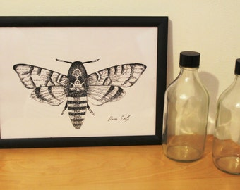 Moth print -black and white, moth art, insect illustration, ink drawing, silence of the lambs