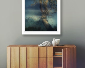 Tree Print, Fine Art Photography, Australia, Abstract Nature Print, Photo Large Print, Coastal Wall Art, Ocean Photography, Sarah Bell, Art
