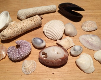 Genuine Sea Shells, White Corals, Coral Pieces, Sea Shells Decoration