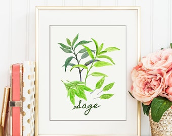No.63 Watercolor Sage Illustration, herb illustration, kitchen decor, wall art for instant download, watercolor poster