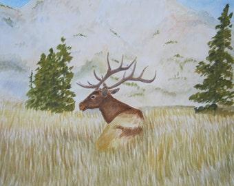 Elk resting in a field