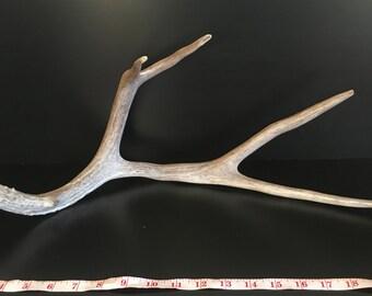 Brown 4 Point Mule Deer Antler Shed Horn - 403