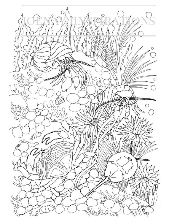 Adult Coloring Book, Printable Coloring Pages, Coloring Pages, Coloring Book for Adults, Instant Download, Treasures of the Ocean 2 page 13