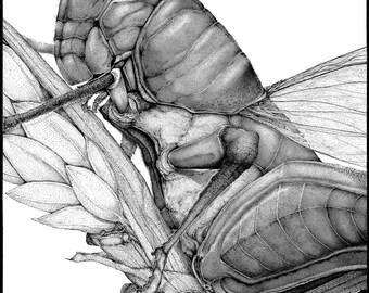 Grasshopper - Fine Art Print