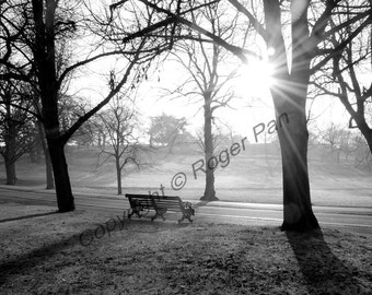 Digital Download,'Greenwich Park 2', black & white photography by Roger Pan