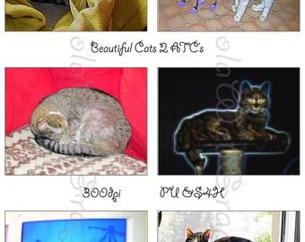 Beautiful Cats 2 ATC Cards (PU,S4H) Scrapbook