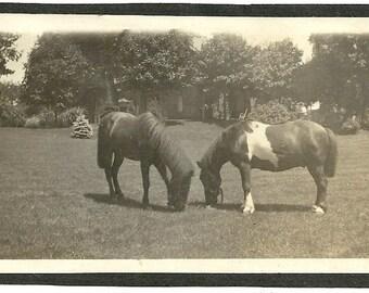 Two horse vintage photo image black and white rural farm life animal pony