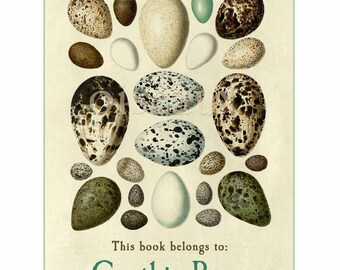 Bird's Eggs - Vintage Personalized Bookplates - Book Labels, Spring, Easter, New Baby