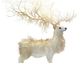 """of conscience and loss - white forest stag - Original Giclee Edition Print - 13x19"""""""