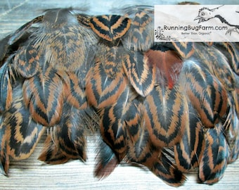 Feathers Cruelty Free Feathers Real Feathers Natural Feather Partridge Hen Brown Feather Black Feather Real Bird Feathers For Crafts / PC8