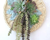 Coastal Style Succulent Wall Hanging Succulent Wreath Faux Hanging Donkey Tail Sedum Echeveria