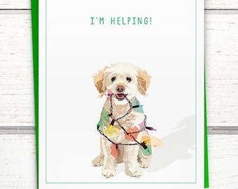 Funny dog Christmas card. Dog funny holiday cards. Funny Christmas cards. Poodle Christmas card. Maltese Christmas card.