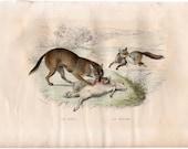 1837 ANTIQUE WOLF & FOX engraving original antique safari animal print -