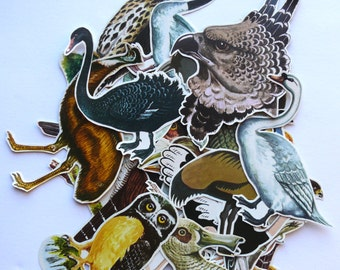15 Mixed ANIMAL Die Cut - BIRDS Clippings - Vintage paper cut-outs for collage or scrapbooking