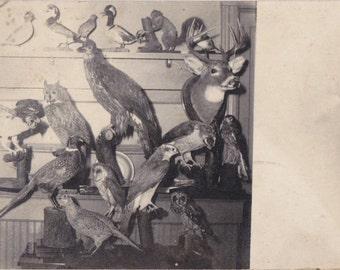Home Taxidermy- 1910s Antique Photograph- Taxidermist- Stuffed Birds- Unusual- Found Photo- Real Photo Postcard- RPPC- Paper Ephemera
