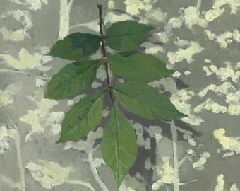 "10x10"" Leaf Print - ""Black Ash Leaves"""