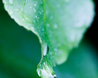 Listen to the Rain Photography Raindrops on Leaf Photography Water drops Photo Environmental Wall Décor Green Nature Macro View - P045