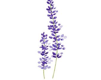 Lavender Watercolor Print - Botanical Art - Lavender Art - Flower Wall Art