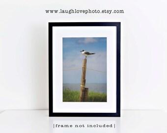 Seagull Photo, Vertical Sea Gull Bird Picture, Seaside Fence Beach House Nature, Home Decor Wall Art Nautical Coastal Lake Tropical Decor
