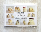 Chicken Postcards Set Chicks in Hats Baby Chicks Stationary Bird Photo 4x6 (12)