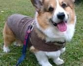 Corgi coat Tweed jacket Dog winter coat dark brown herringbone woolly coat with fleece ( LB-MM-CG / Long-Bodied Medium-sized dog M CorGi)