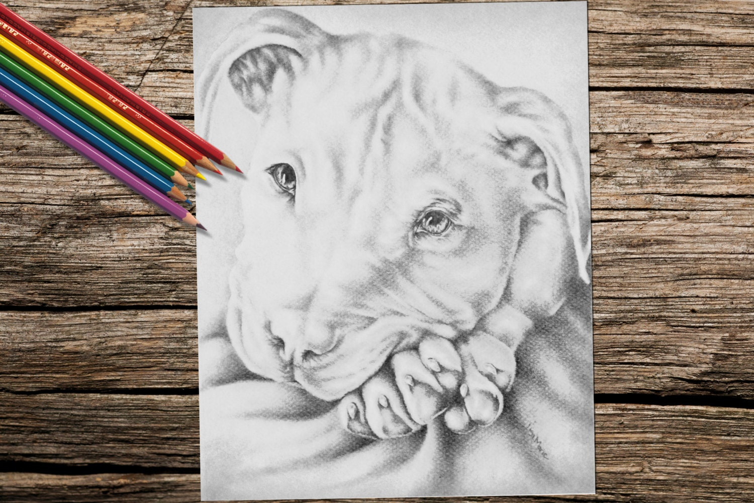 Coloring pages and coloring book