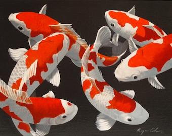 Red and White Koi