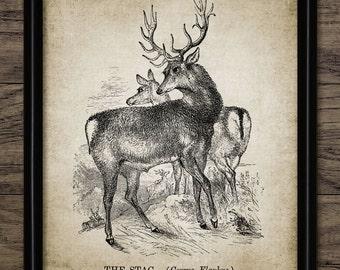 Stag Print - Stag Poster - Deer - Buck - Stag Illustration - Woodland - Digital Art - Printable Art - Single Print #1 - INSTANT DOWNLOAD