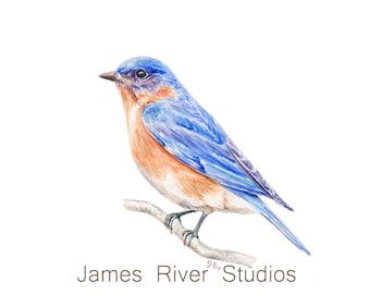 Watercolor Bird Watercolor Painting Bird Print. Bluebird Watercolor Bluebird Watercolor Painting Bluebird Bird Wall Decor Blue Bird Wall Art