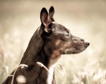 Observer > Dog Photography > Dog Print > Dog Fine Art > Vet Wall Decor > Vet Clinic Decor > Howling Dog Print > Black Dog Wall Art > Animal