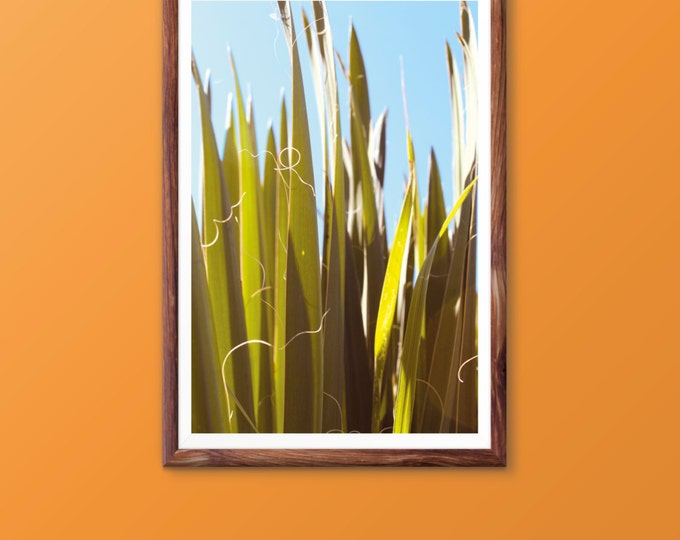 Tropical leaf print Leaf print Tropical leaves Palm leaf print Palm print Plant leaf print Tropical art decor Plant photograph Printable art