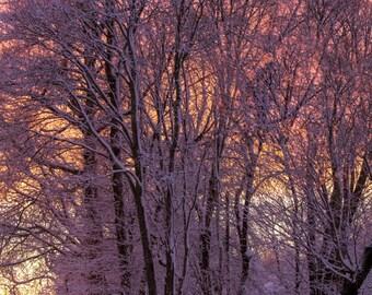 Winter Foliage ~Warwick Country Club, Warwick Neck, Rhode Island, Sunset, Art, Artwork, Photograph, Joules, New England, Snow,Winter Scenes