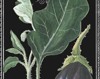 Eggplant Drawing, Eggplant French, French Eggplant, Aubergine Drawing, Aubergine French, Eggplant Illustration, Botanical Illustration, Art