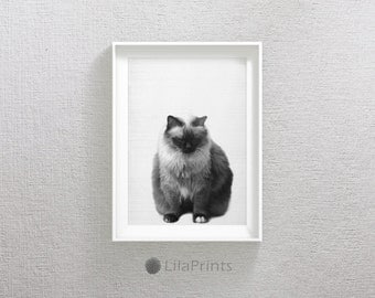 Cat Print, Black and White Prints, Nursery Cat Print, Cat Wall Art, Black and White Wall Art, Cat Printable Art, Nursery Animal Prints, Cat