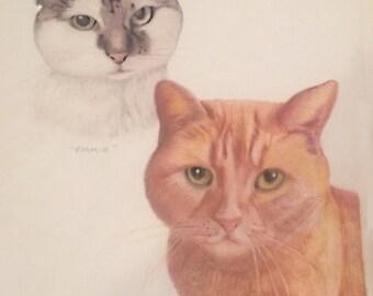 Pet Portrait Cat 11x17