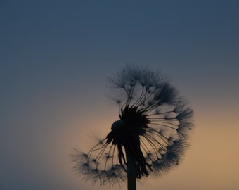 Make A Wish,dandelion, Canvas, Photography, Art, Canvas Special of the week,deal,sale, Original ,Wall Art, Spring, Photo,,JAngeloPhotography