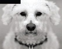 For dog lovers trimmed bichon frise symmetrical halftone print.