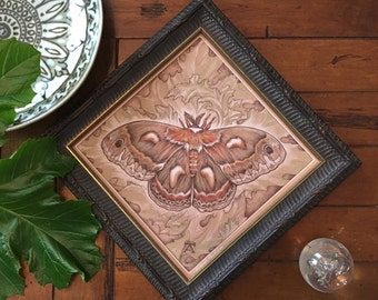 Cecropia (Drawing of a Cecropia moth on acanthus)