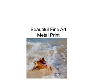 Photography, Art, Metal Print, Seashell in Surf