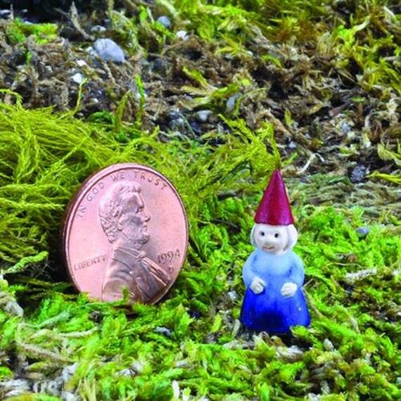 Female Garden Gnomes: Micro Miniature Gnome Lady Female Garden Gnome Figurine