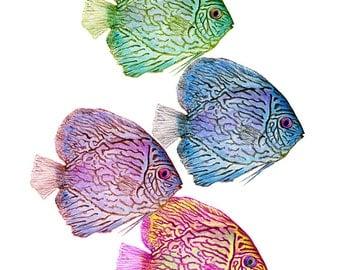 Tropical Fish Art Fish Painting Fish Print. Fish Watercolor Fish Wall Decor Fish Wall Art Ocean Art Sea Art Discus Fish Colorful Fish Art.